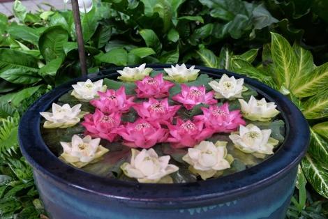 タイのハスの花
