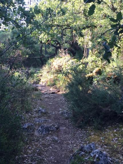 Good trails