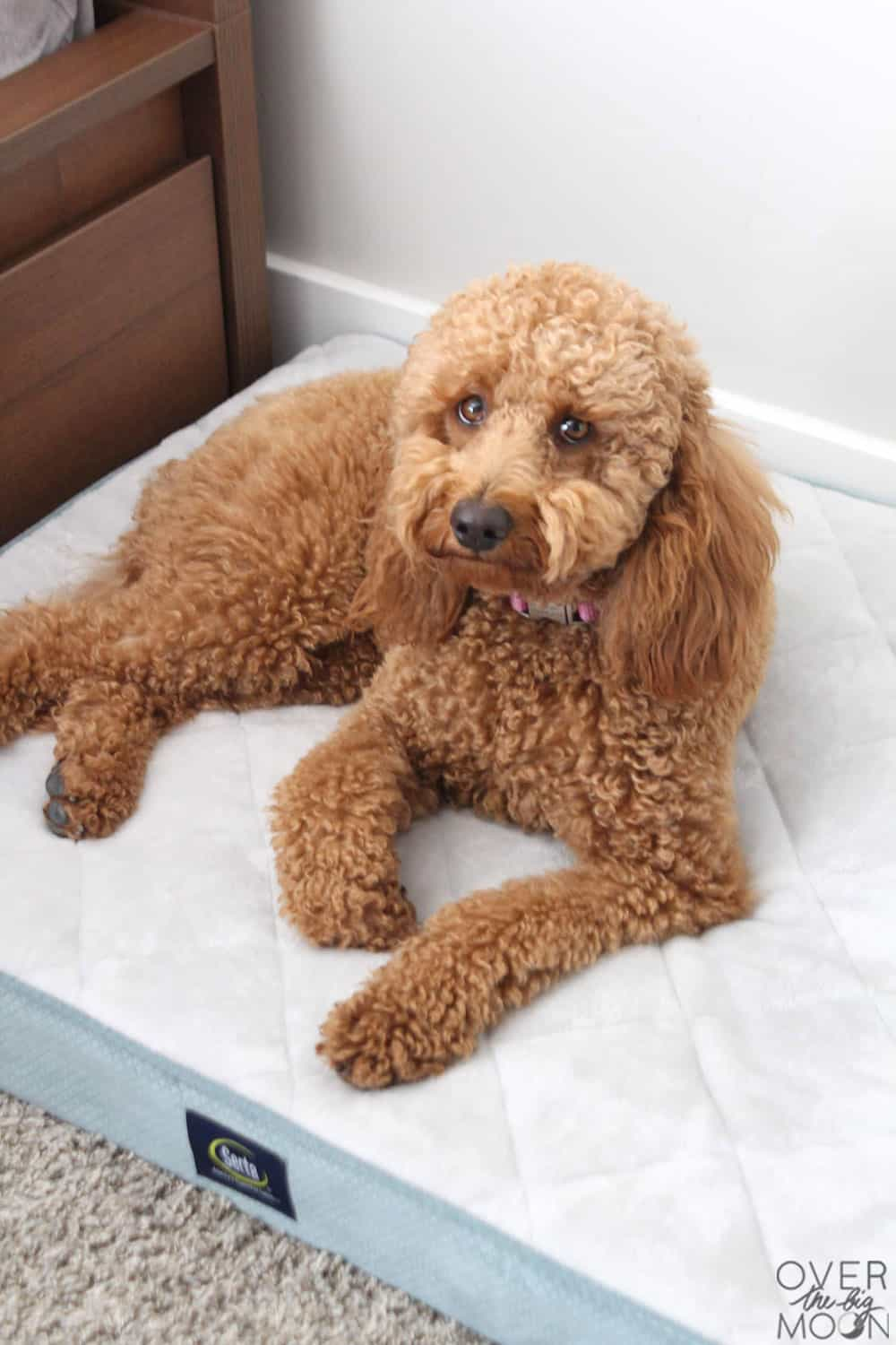 Add an area for the dog in a kids bedroom! From overthebigmoon.com!
