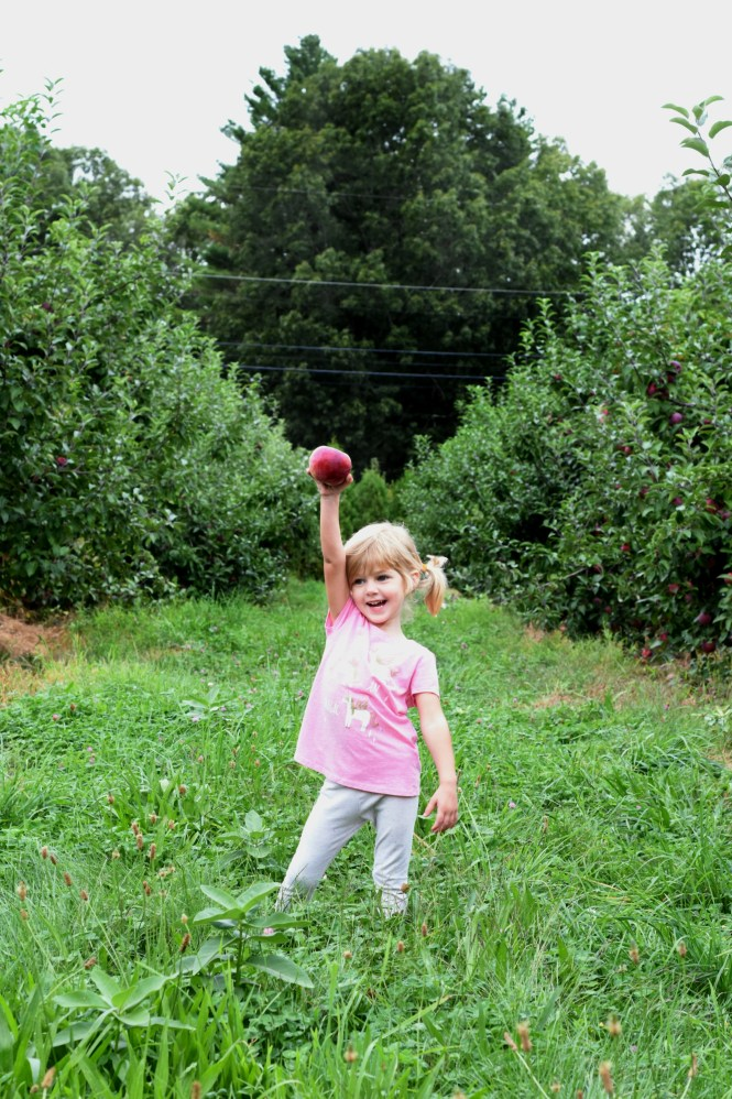Looking for things to do with a toddler in Rhode Island during the fall? Apple picking is a great toddler activity for your kids while visiting Rhode Island.