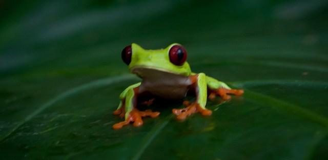 Nature in Costa Rica