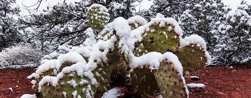 Winter in Arizona