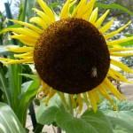 Garden0004-