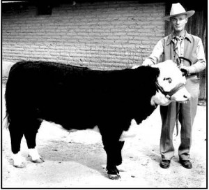 Jack Procter and a prize bull in 1941