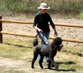 dog walking resized