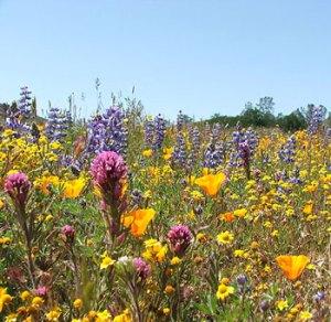colorfulflowersplus