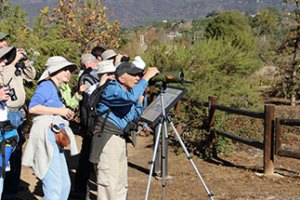 Free Guided Bird & Nature Walk