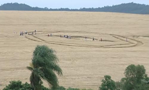 Um segundo agroglifo foi encontrado na mesma manhã em outra lavoura de Ipuaçu