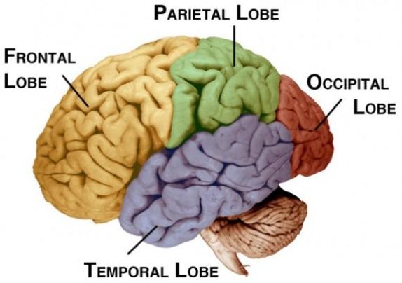 lobes2-570x401