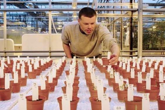 Pesquisador Wieger Wamelink inpeciona plantas em 'solo marciano'.