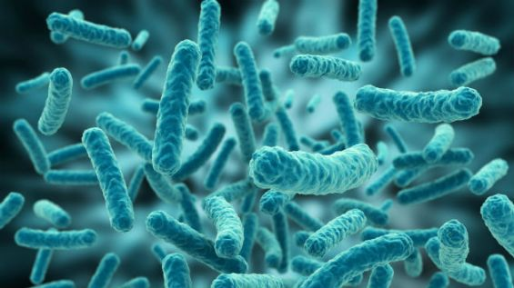 microorganismos_extraterrestres