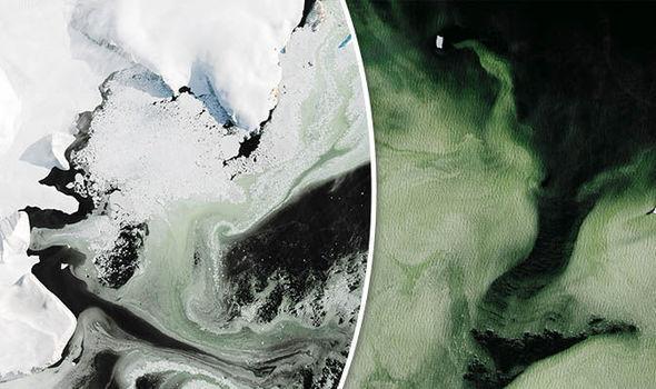 área da Antártica se tornou verde