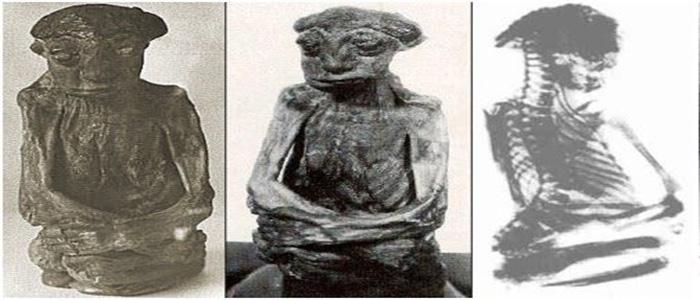 Nova múmia anômala de Nazca é revelada para a Internet (e outras informações) - ATUALIZADO 4
