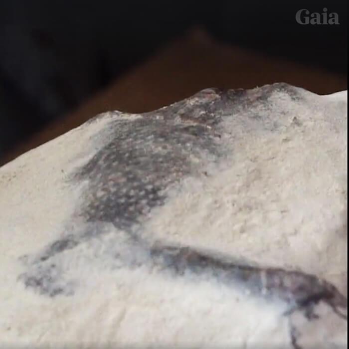 Nova múmia anômala de Nazca é revelada para a Internet (e outras informações) - ATUALIZADO 3