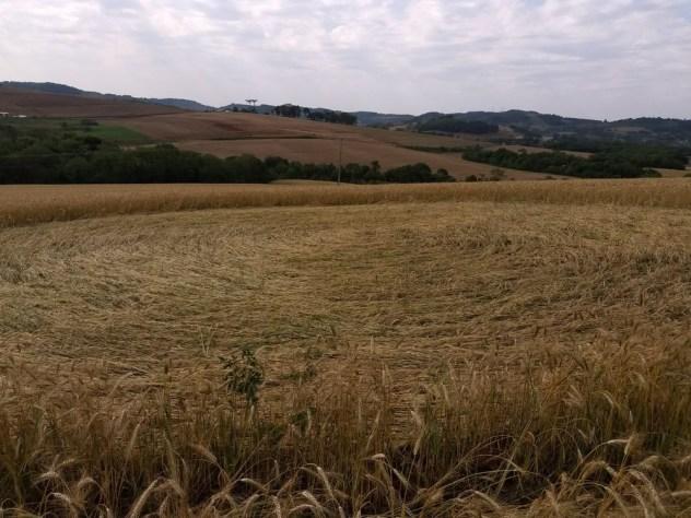 Agroglifo aparece no oeste de Santa Catarina