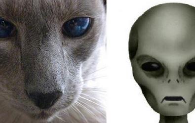 Os gatos podem ser espiões alienígenas