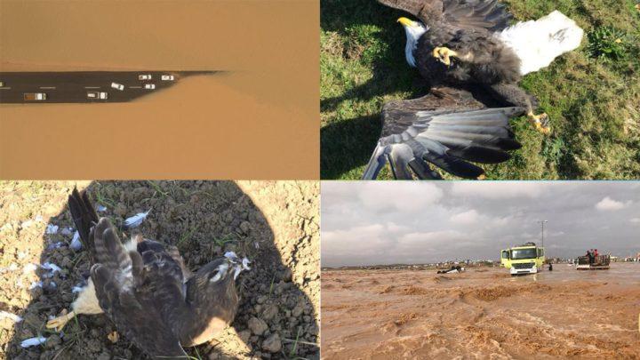 Enchentes de proporções bíblicas no deserto e pássaros caindo do céu sem motivo óbvio