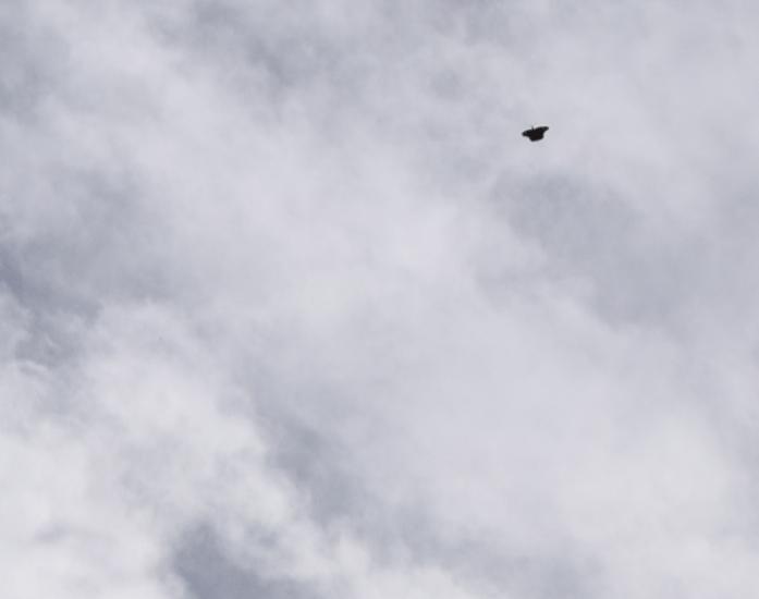OVNIs escoltam caças sobre San Antonio, Texas - EUA (foo fighters?) 4