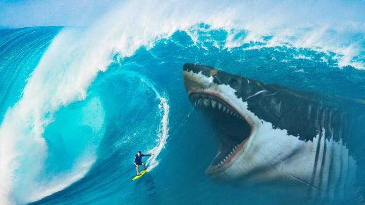O que teria consumido o corpo deste enorme tubarão, deixando só a cabeça 1