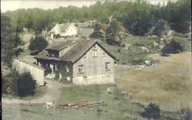 """""""Gamlehusan"""" på Ilebekk. Den siste familien som bodde der var Emma og Bernt J.S. Ilebekk og barna Agnes, Sverre og Inger. Husene ble revet sist på 1940-tallet og kvisten ble bygd opp som hytte på Mushom. Stuene ble benyttet i det nye huset som Sverre B. Ilebekk bygde et stykke unna. Uthuset lå til høyre på bildet, men brant ned og en trodde det var en pyroman som hadde satt fyr på det. Husene i bakgrunnen tilhører nå Torgeir og Gunnhild Ilebekk og øverst oppe kan så vidt skimte huset til Per og Gerd Torhild Fuskeland."""