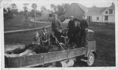 Vellykket elgjakt på Horrisland 1947: fra høyre: Kåre, Aslaug(?), Martinius og Anton (på huk foran) Sangesland, Hørte (bodde på gården der Hågensen bor nå), ukjent fra byen og to gutter, antakelig sønnene til Hørte som hette Erling og Mattias (?).