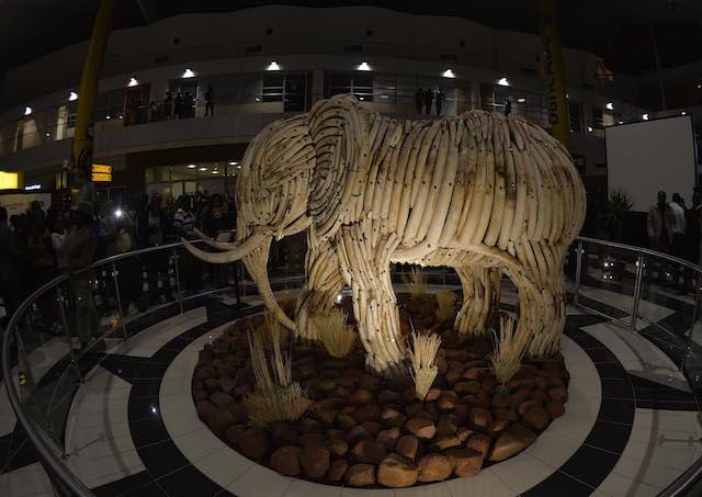 BOTSWANA , Gaborone 16 July 2015, Botswana president let Gen. Seretse Khama Ian Khama officially unveils the live size Elephant Sculpture of ivory at the Sir Seretse Khama International Airport in Gaborone on 16 July 2015. The ivories comes from the elephants which died naturally. (PHOTO/MONIRUL BHUIYAN)