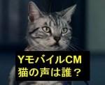 YモバイルCMの猫「ニャンシー社長」の声は誰?英語が上手い芸能人?