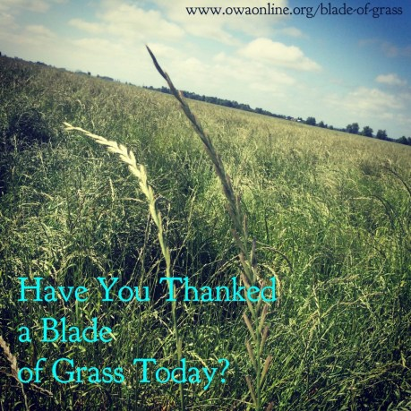 Have You Thanked a Blade of Grass Today?