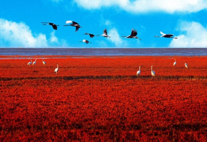 Red-Beach-Panjin-China-Birds-728x499