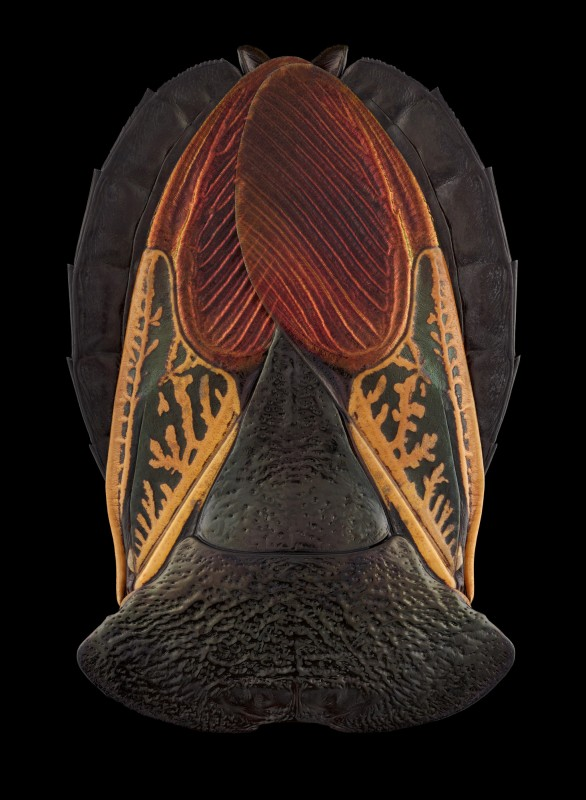 pascal-goet-insect-mask-3