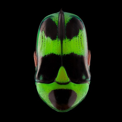 pascal-goet-insect-mask-5