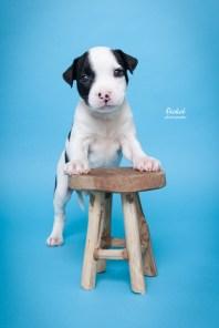 Owiwi Honden Fotografie