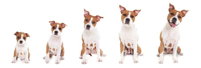 Puppy groeifoto