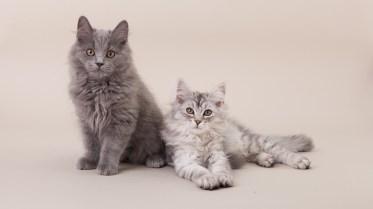 Kittens Owiwi