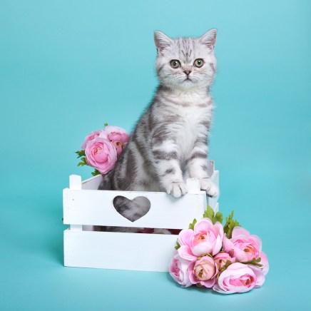 Eefke Kitten Bloemen Owiwi