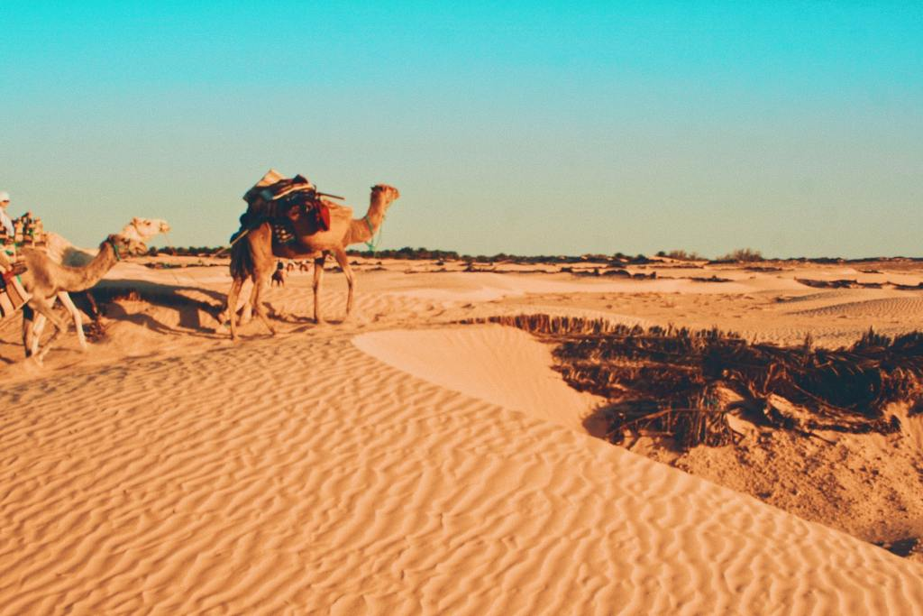 places to visit in tunisia in 2021