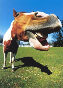Funny Horse Smile8