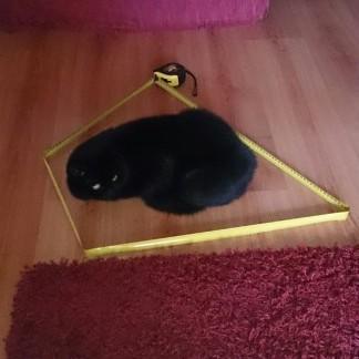 cat_circle (17)