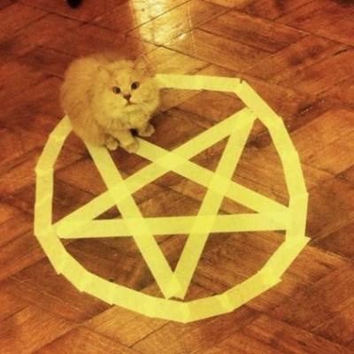 cat_circle (4)