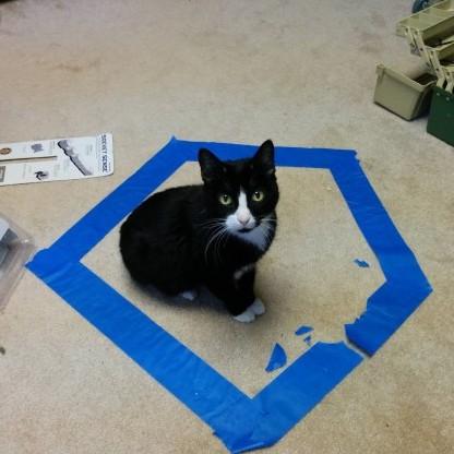 cat_circle (7)