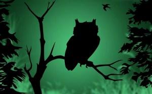 owl-878899_640