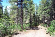Aspen Springs Forest Road