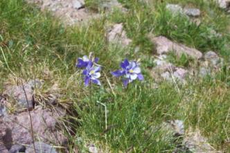 Pagosa springs wildflowers