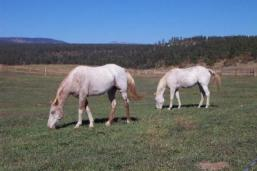 Chris Mountain Ranch horses