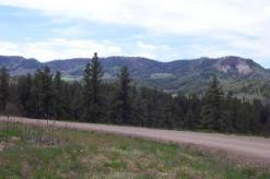 Roadside Meadows