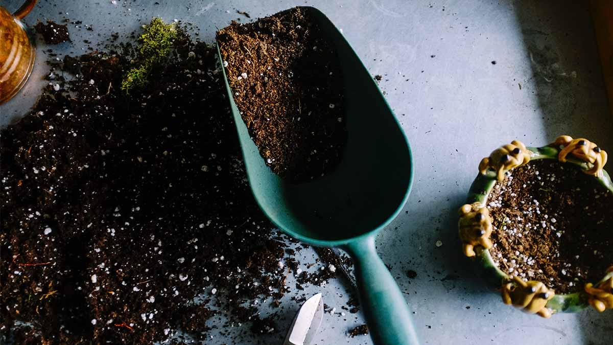 How to Start Your Own Gardening and Landscaping Business