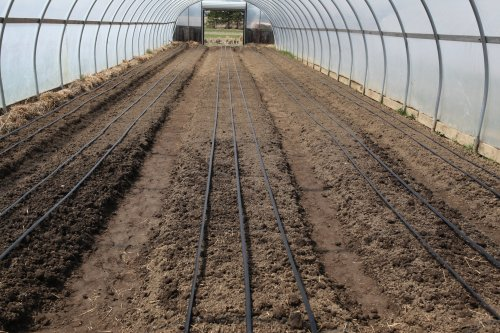 greenhse #1 ready to plant in april