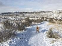 7. Kestrel Trail, December, 2015, Boise