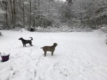 Byram's Bella and Daisy_0825