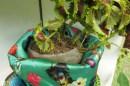 tropical plant in a handbag